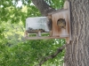squirrellinfeeder